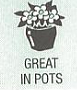 great in pots